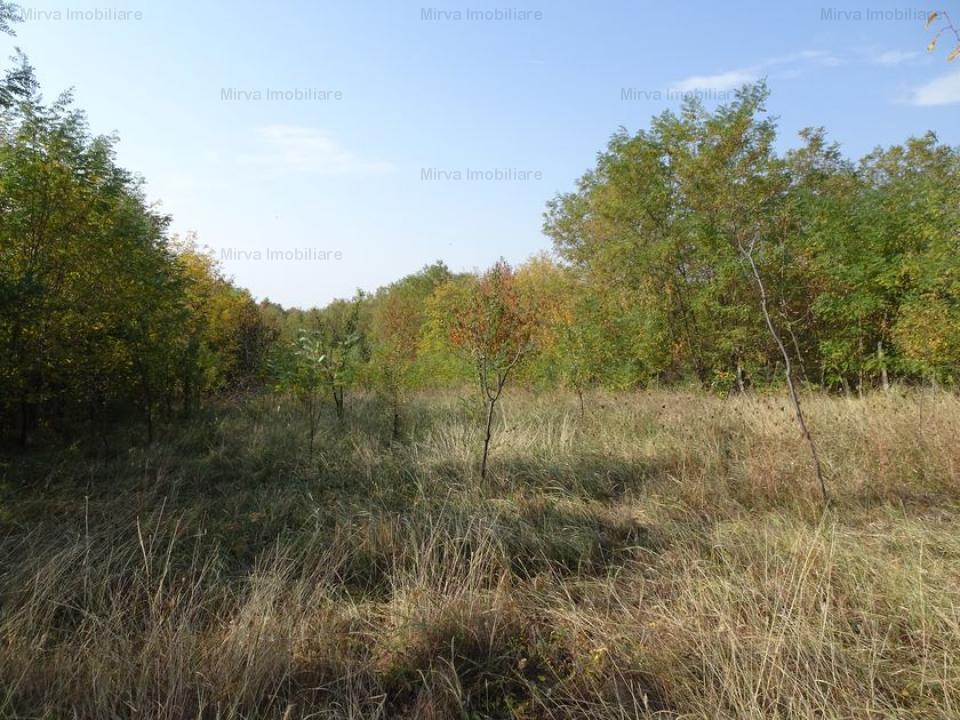 Vanzare teren extravilan/livada, in Paulesti