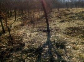 Vand teren 1850 mp Valea Mare Stefanesti