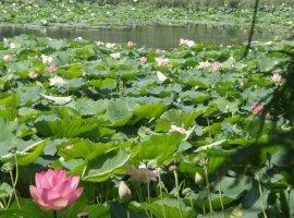 Vanzare Vila Snagov Ghermanesti cu deschidere lac Snagov