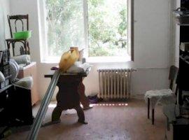 Dristor Nicolae Grigorescu Titan Apartament 3 camere
