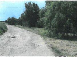 Teren intravilan 10568 mp, Tancabesti, Ilfov