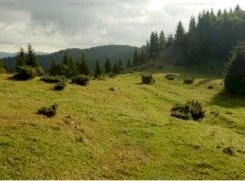 Teren intravilan 1395 mp , Pietroasa sat Boga ,Bihor