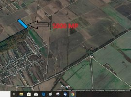 Teren in Clinceni, Ordoreanu langa padure, 5000mp, zona in dezvoltare.