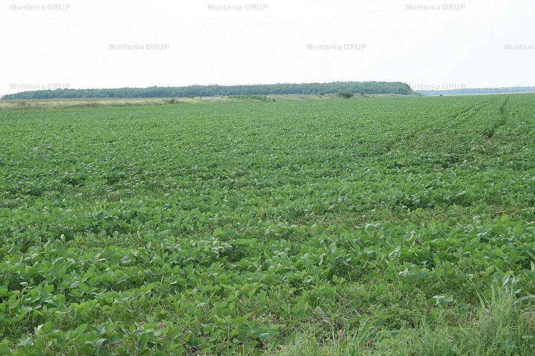 SINESTI - Hagiesti, vanzare 22.688 mp. teren agricol plus casa din boltari