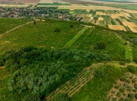 11.000 euro/ha viță de vie în Covăsânț și Șiria