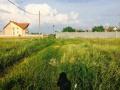 Teren intravilan - 35 euro/mp, Arad, Micălaca