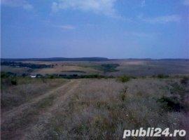 Vanzare  terenuri agricol Timis, Stanciova  - 125000 EURO
