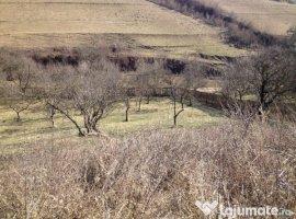 Vanzare  terenuri constructii  27.5 ha Covasna, Bodoc  - 0 EURO