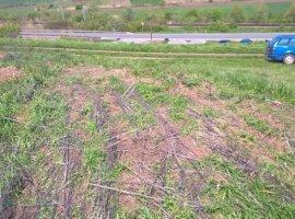 Vanzare  terenuri constructii Cluj, Mera  - 2733 EURO