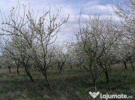 Vanzare  terenuri agricol Sibiu, Sorostin  - 100000 EURO
