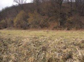 Vanzare  terenuri agricol  6500 mp Cluj, Somesu Rece  - 50000 EURO