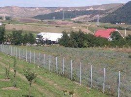 Vanzare  terenuri agricol Mures, Ranta  - 0 EURO
