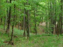 Vanzare  terenuri agricol Dolj, Sopot  - 2200 EURO