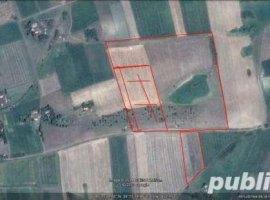 Vanzare  terenuri agricol  76.6 ha Mures, Saulia  - 229800 EURO