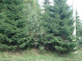 Vanzare  terenuri constructii Cluj, Muntele Baisorii  - 3700 EURO