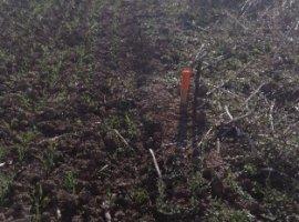 Vanzare  terenuri agricol Ilfov, Posta  - 7500 EURO