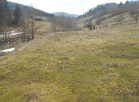Vanzare  terenuri agricol Suceava, Vama  - 1 EURO