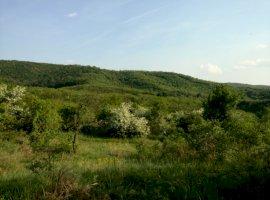 Vanzare  terenuri agricol Arad, Minis  - 4500 EURO