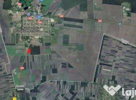 Vanzare  terenuri constructii  9900 mp Timis, Jimbolia  - 0 EURO