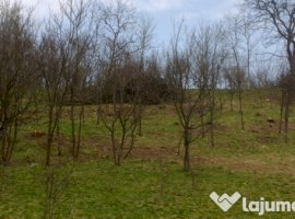 Vanzare  terenuri agricol  2800 mp Sibiu, Bradu  - 0 EURO