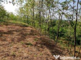 Vanzare  terenuri constructii  575 mp Arad, Minis  - 10500 EURO