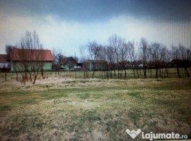 Vanzare  terenuri constructii  3000 mp Timis, Foeni  - 11500 EURO