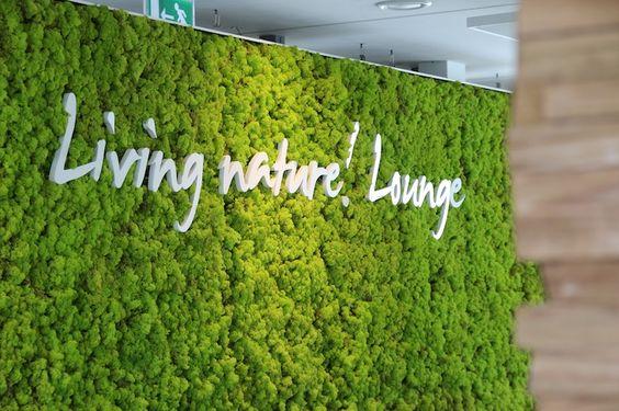 Panourile cu licheni decorativi sunt la modă !  Pentru birou sau casa ta !